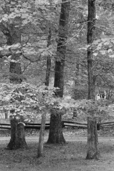 A copse of trees
