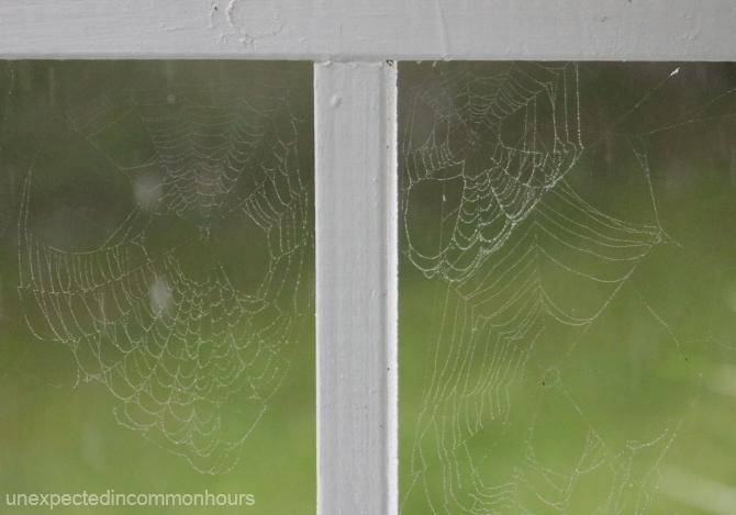 rainy day webs
