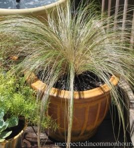 deck grass 2