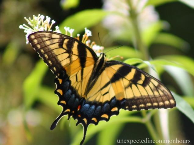 multi butterfly