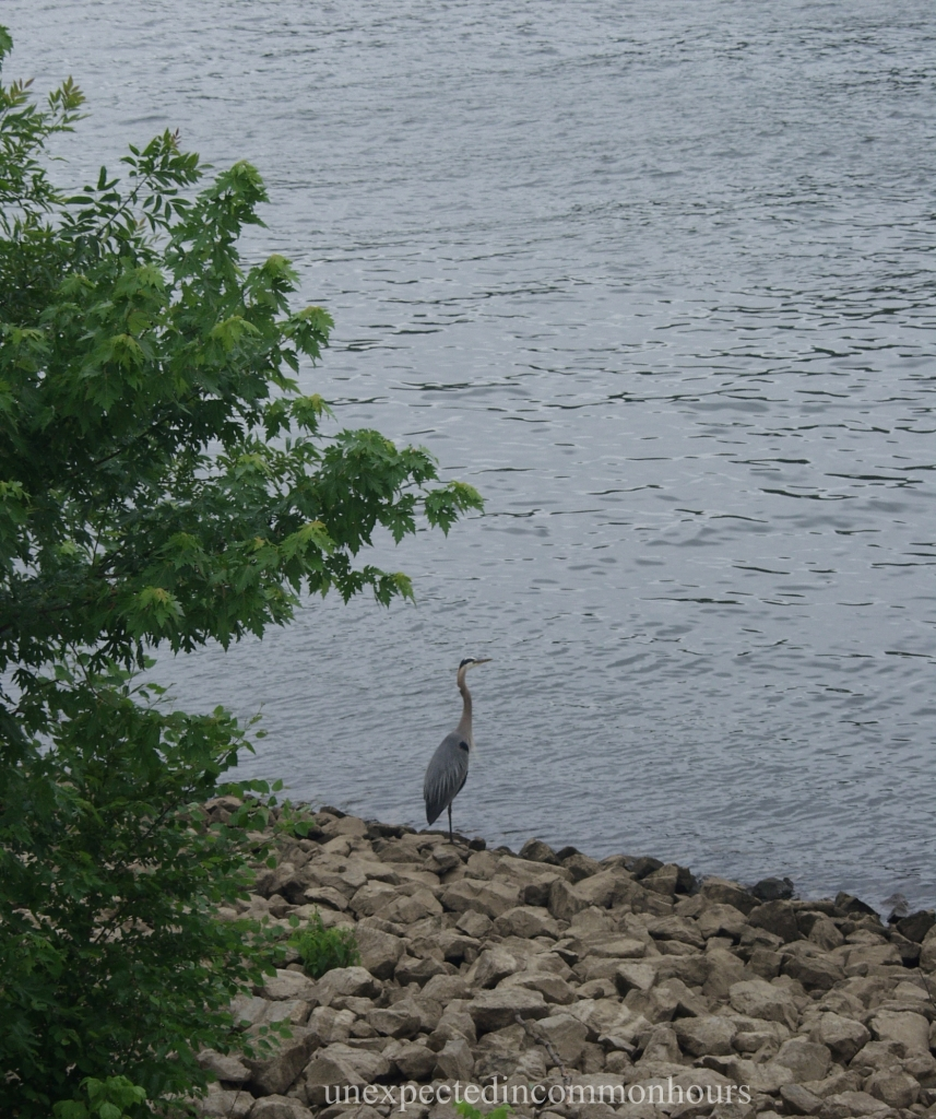 Along the Tennessee River