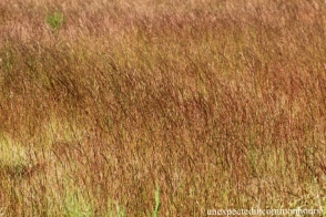 Brown grass in the field