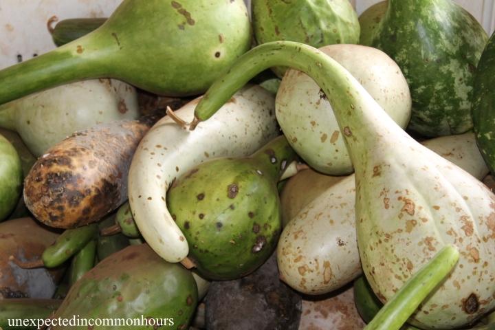 gourds #2