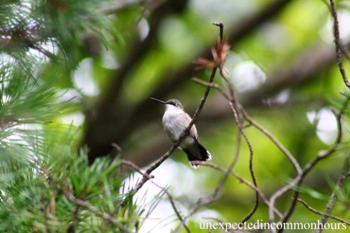 Last hummingbird of the season
