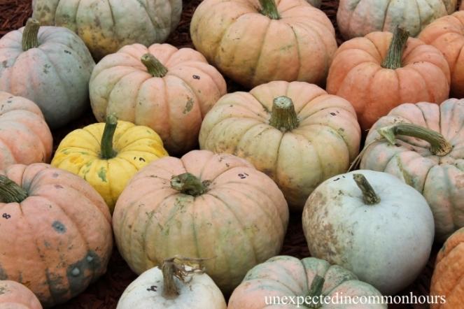 pumpkins #3