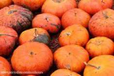 pumpkins #4