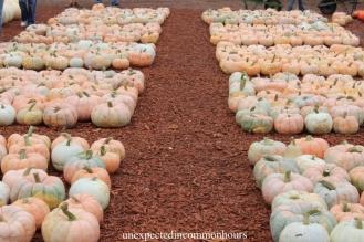 pumpkins #8