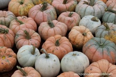 pumpkins #9