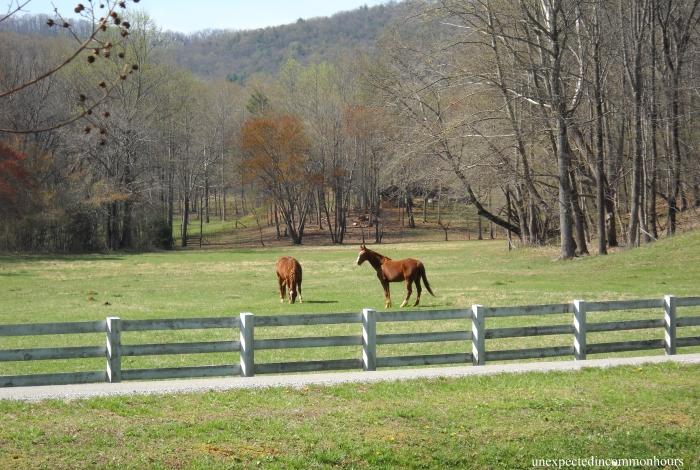 Horses in Kellum Valley