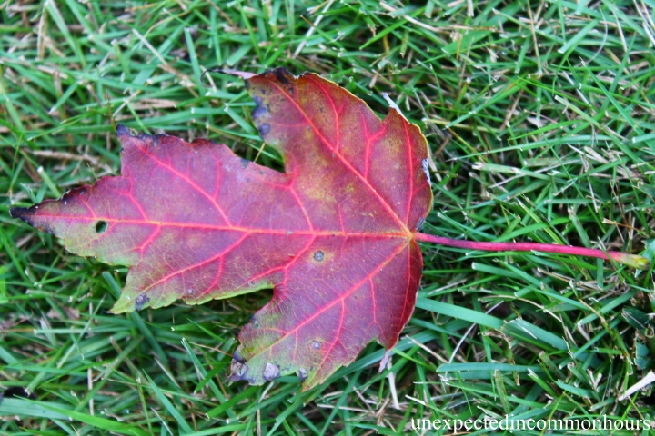 One leaf in the grass