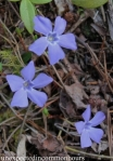 Three wildflowers