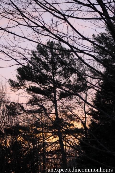 winter sunrise #1