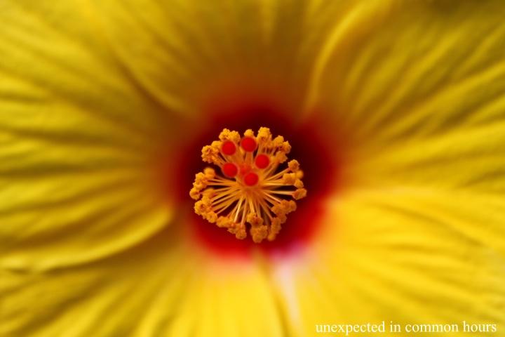 Hibiscus #3