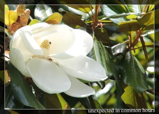 Magnolia visitors