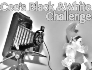 Cee's black and white challenge