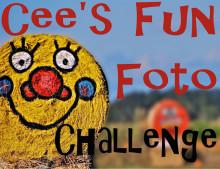 Cee's Fun Foto