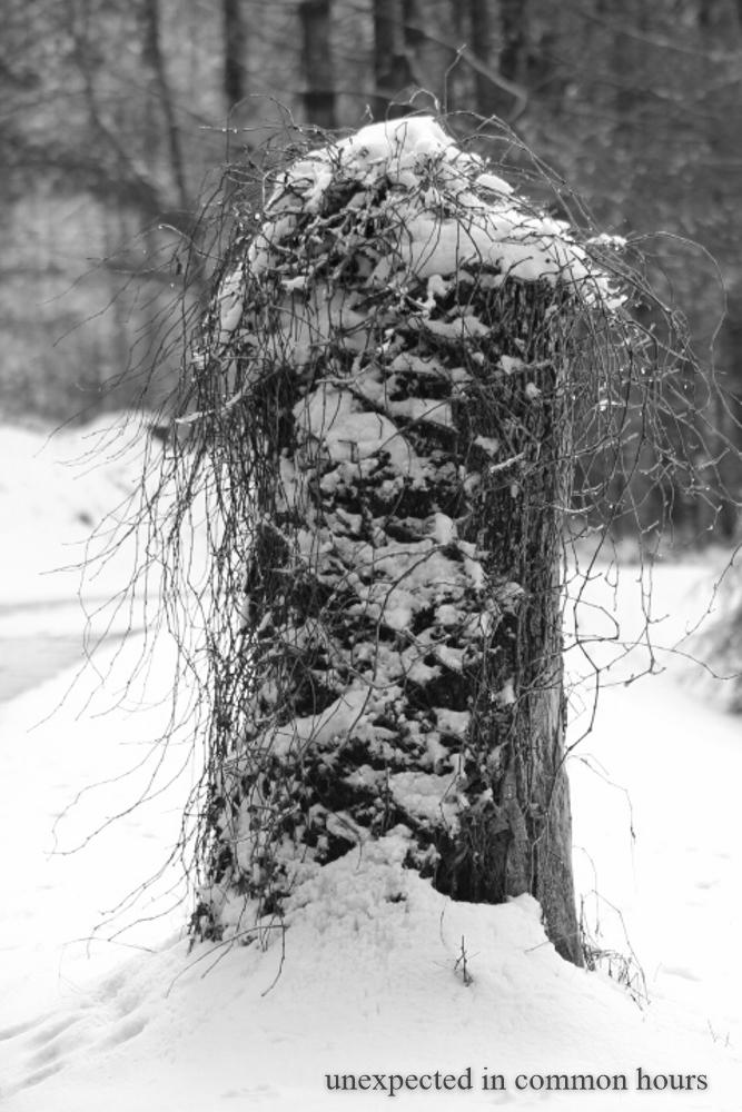 Winter stump