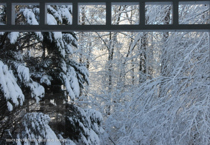 From the living room window #2