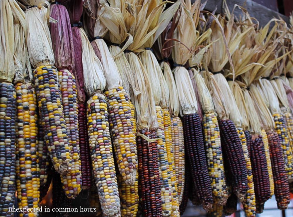 Autumn corn