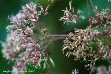 wildflowers and weeds 1