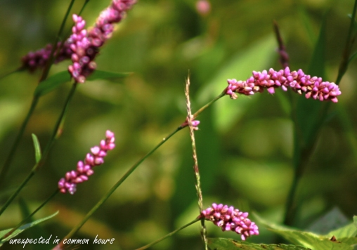 wildflowers and weeds 2