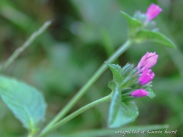 wildflowers and weeds 5