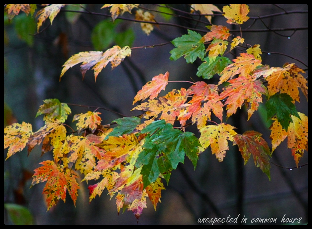 Autumn leaves with border