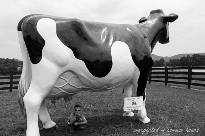 Keep off the cow!