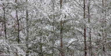 March snow 7