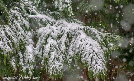 March snow 9