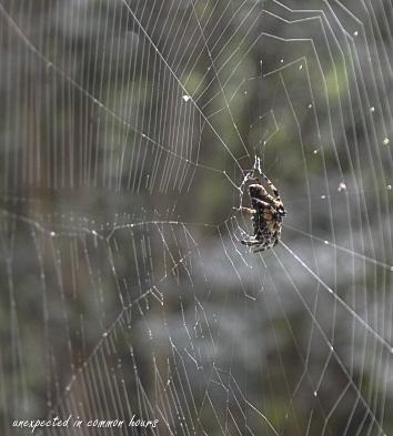 Porch spider