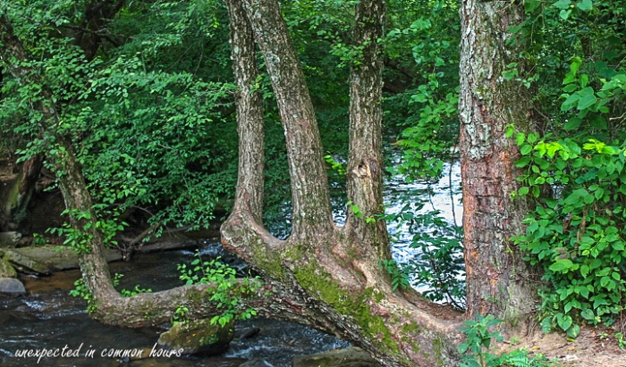 Tree at Stovall Mill Covered Bridge in White County, GA