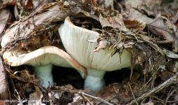 Mushrooms 1