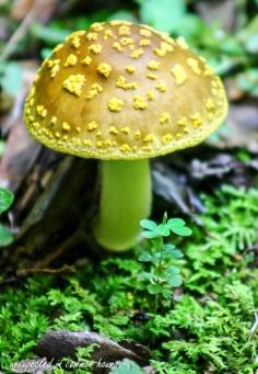 Mushrooms 10
