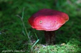 Mushrooms 5