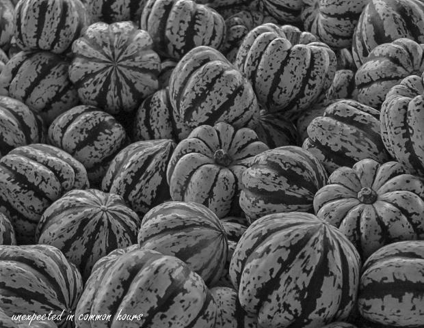 circles-and-curves-pumpkins-2