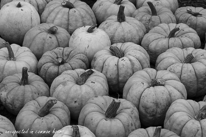 circles-and-curves-pumpkins