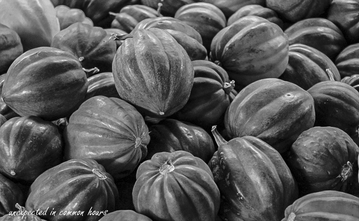 circles-and-curves-squash