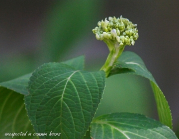 late-bloomer-2