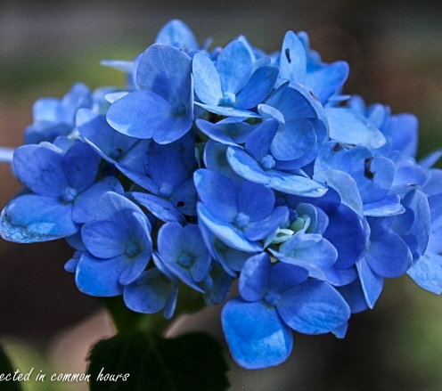 late-bloomer-4