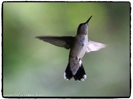 my-favorite-bird