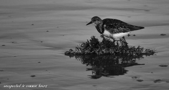 solitary-shore-bird