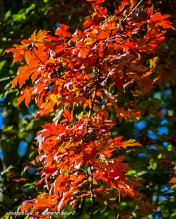 fall-color-1