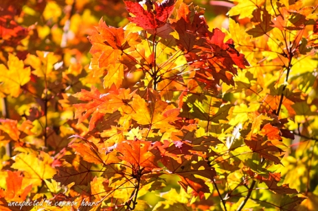 fall-color-2
