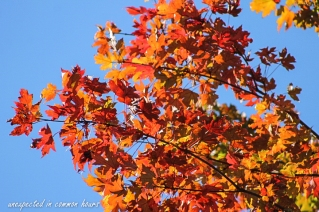 fall-color-4