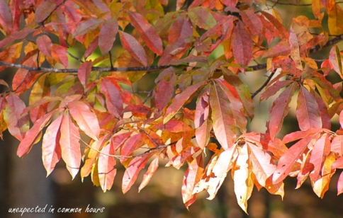 fall-color-5
