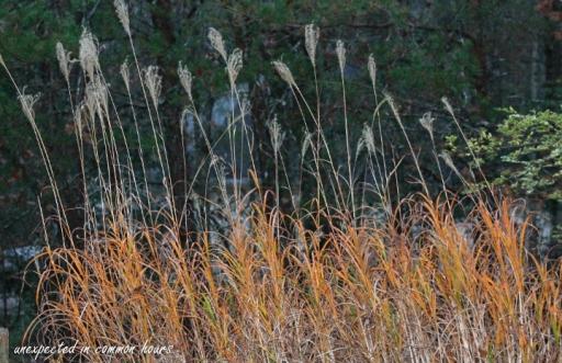 golden-grasses-3