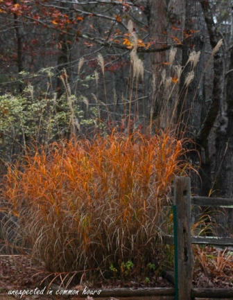 golden-grasses-4