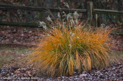 golden-grasses-5