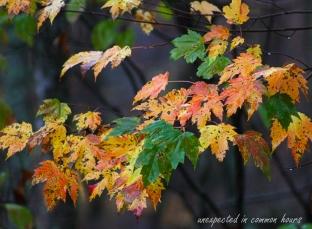 autumn-leaves-1